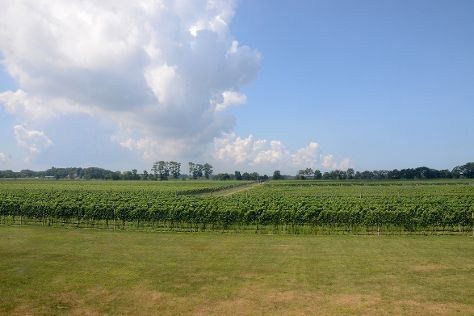 Croteaux Vineyards, Southold, United States