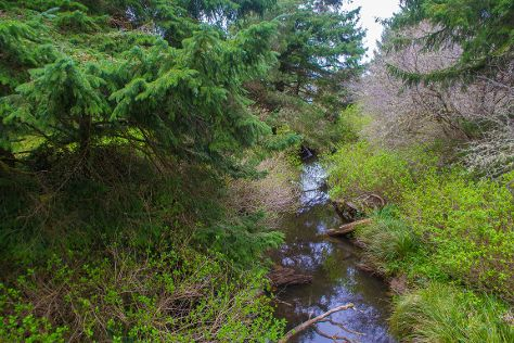 Fogarty Creek State Recreation Area, Depoe Bay, United States