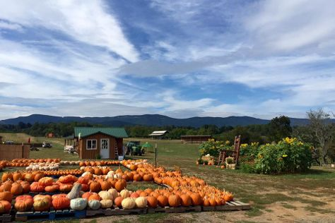 Layman Family Farms, Blue Ridge, United States