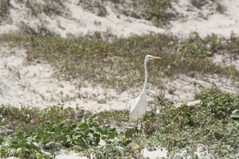 Mustang Island State Park, Port Aransas, United States