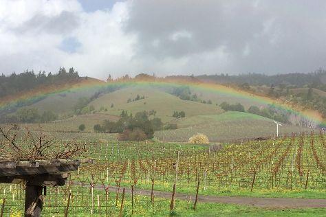 Navarro Vineyards, Philo, United States