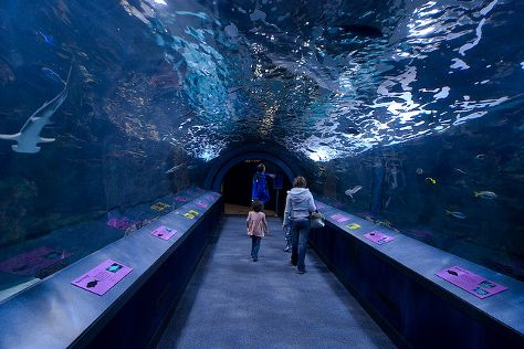 Newport Aquarium, Newport, United States
