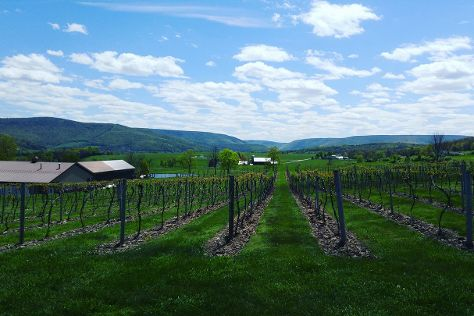 Nimble Hill Vineyard & Winery, Tunkhannock, United States
