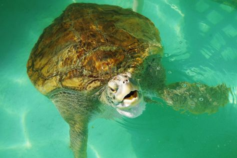 Sea Turtle, Inc., South Padre Island, United States