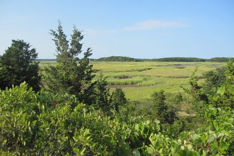 Wellfleet Bay Wildlife Sanctuary, Wellfleet, United States