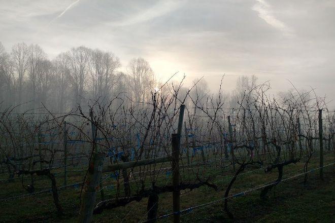 Abingdon Vineyards, Abingdon, United States