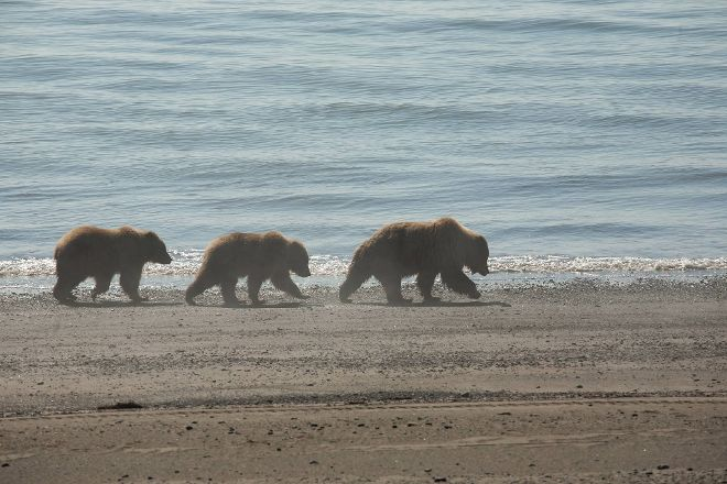 Alaska Bear Expeditions, Anchorage, United States