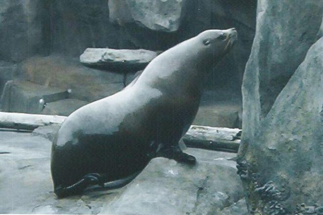 Alaska SeaLife Center, Seward, United States