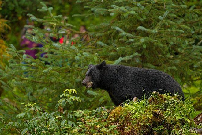 Alaska Vistas, Wrangell, United States