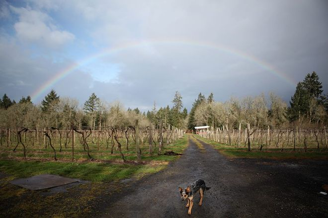 AlexEli Vineyard & Winery, Molalla, United States