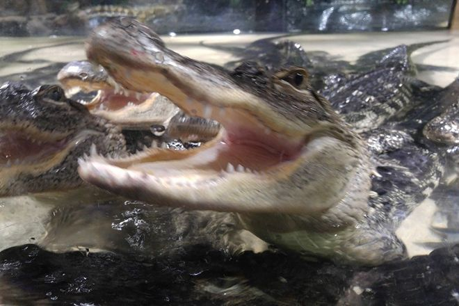 Alligator Alley Adventures, Wisconsin Dells, United States