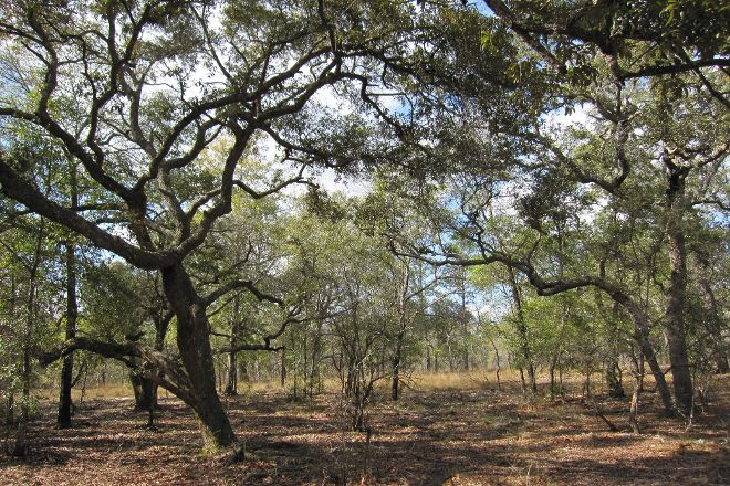 Apalachicola Bluffs and Ravines Preserve, Bristol, United States