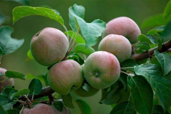 Apple Ridge Orchards, Warwick, United States