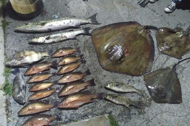Arrow Assault Bowfishing, Miami, United States