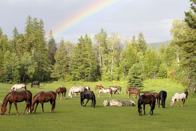 Artemis Acres Paint Horse Ranch, Kalispell, United States