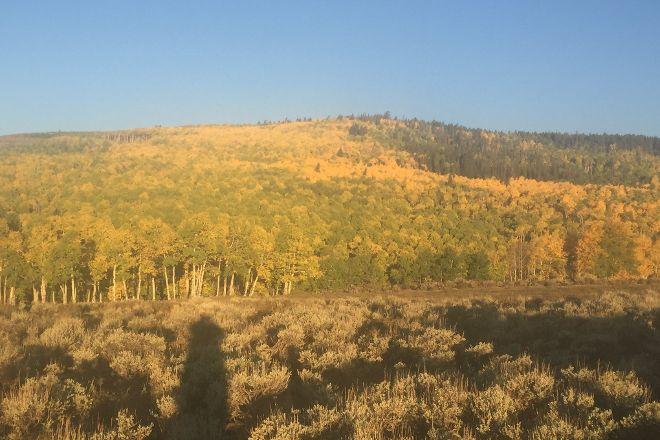 Ashley National Forest, Utah, United States