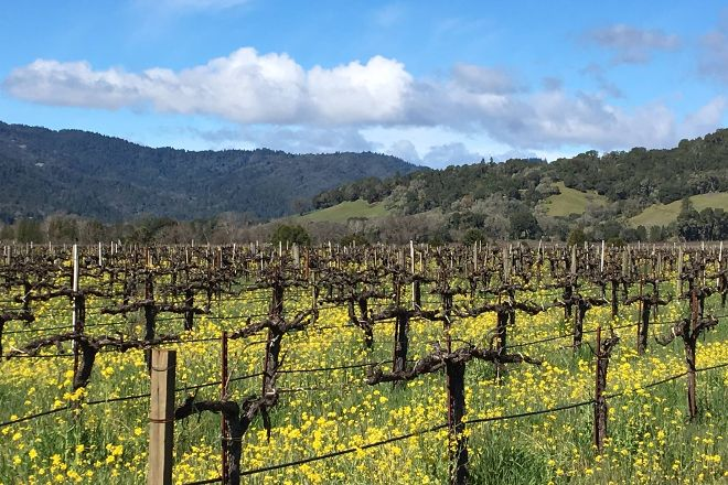 Barra of Mendocino Winery, Redwood Valley, United States