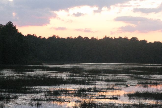 Bass River State Forest, Tuckerton, United States