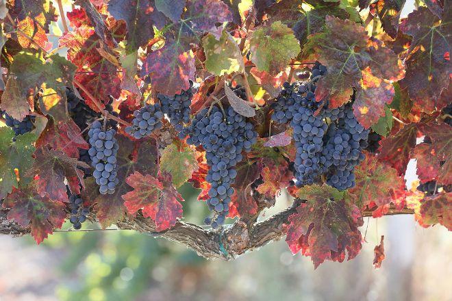 Beau Wine Tours, Napa, United States