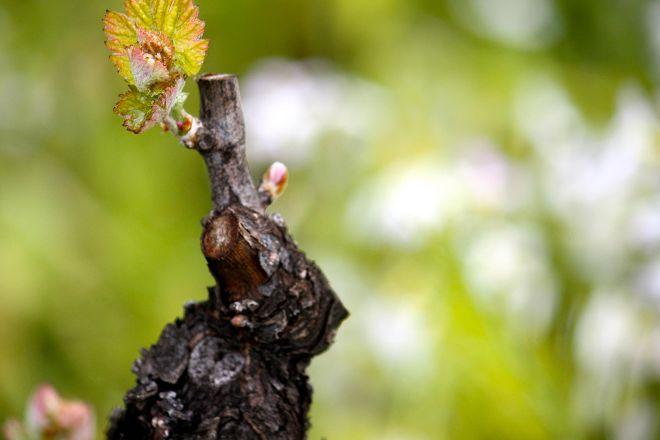 Benziger Family Winery, Glen Ellen, United States