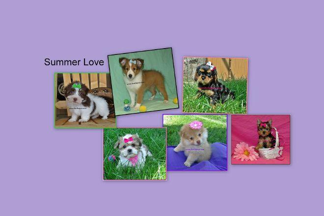 Berlin Pets, Millersburg, United States