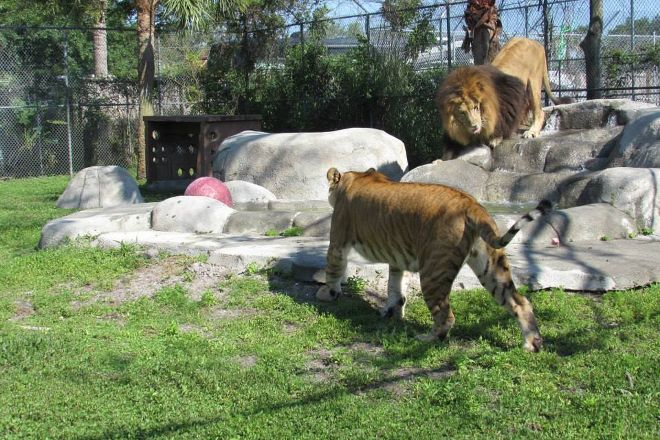Big Cat Habitat and Gulf Coast Sanctuary, Sarasota, United States