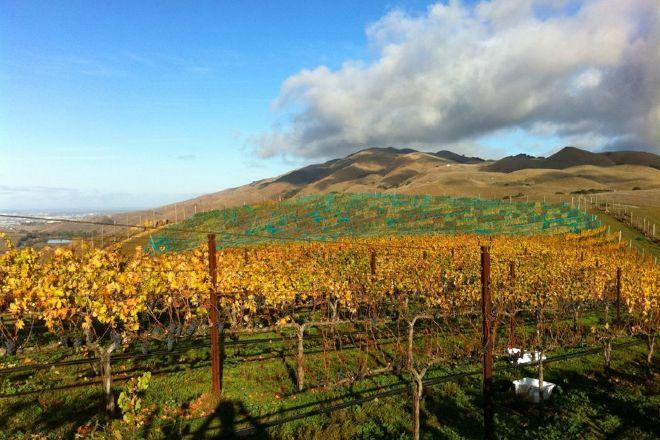 Big Dog Vineyards, Milpitas, United States