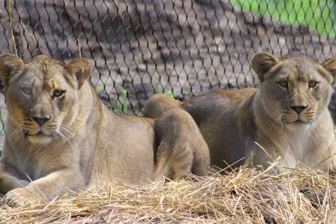 Binder Park Zoo, Battle Creek, United States