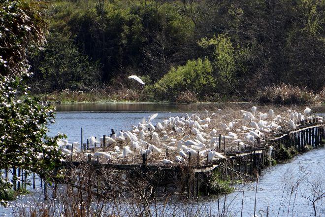 Bird City, Avery Island, United States