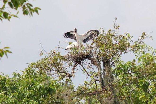 Birdsong Nature Center, Thomasville, United States