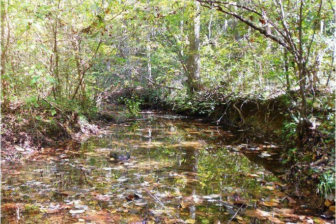 Birkhead Mtn Wilderness, Asheboro, United States