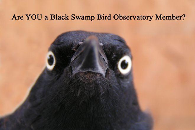 Black Swamp Bird Observatory, Oak Harbor, United States
