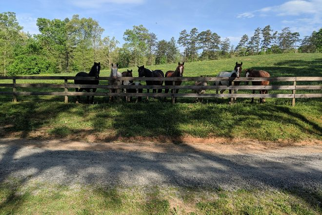 Blanche Manor Horseback Riding, Copperhill, United States
