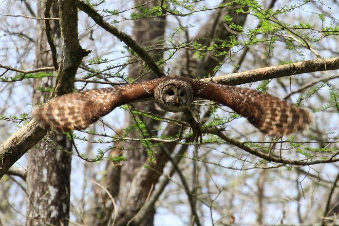 Bluebonnet Swamp Nature Center, Baton Rouge, United States