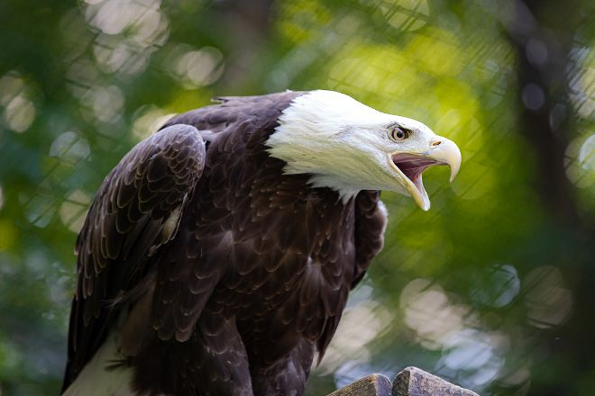 Brandywine Zoo, Wilmington, United States