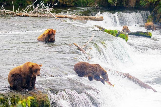 Brooks Falls, Katmai National Park and Preserve, United States