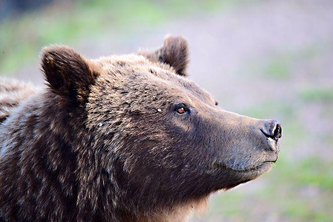 BrushBuck Wildlife Tours, Jackson, United States