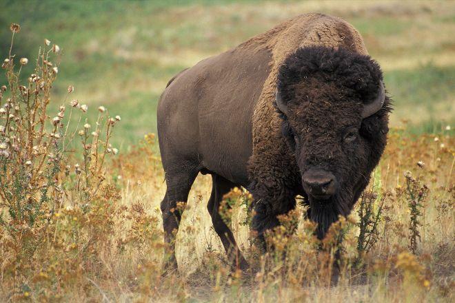 Buffalo Rock State Park, Ottawa, United States