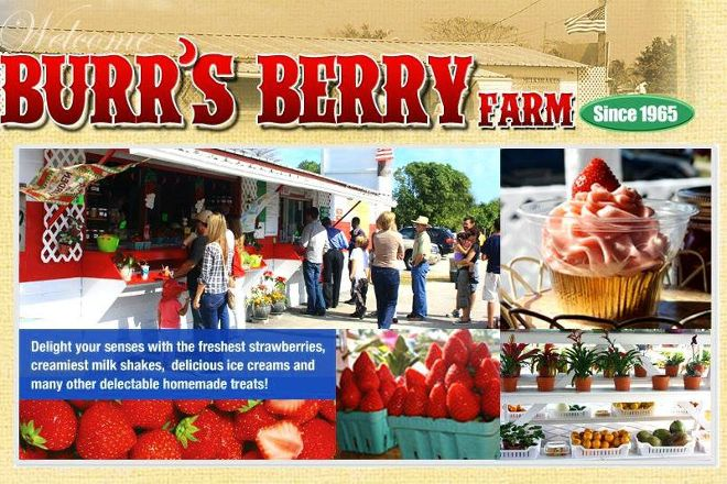 Burr's Berry Farm, Goulds, United States