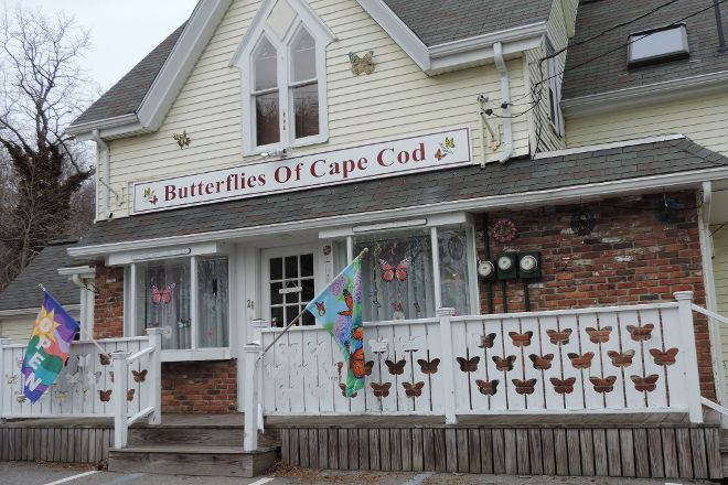 Butterflies of Cape Cod, Bourne, United States