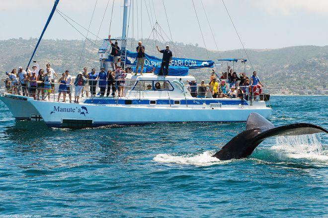Capt. Dave's Dana Point Dolphin & Whale Watching Safari, Dana Point, United States