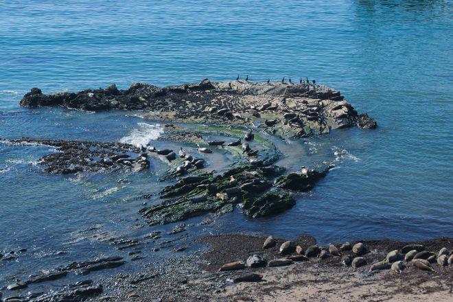 Carpinteria Harbor Seal Preserve and Rookery, Carpinteria, United States