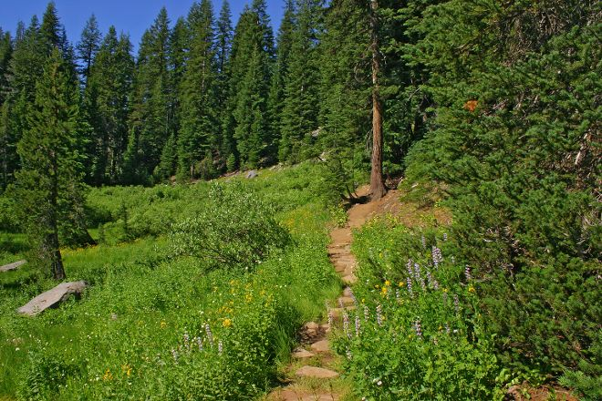 Castle Crest Wildflower Trail, Crater Lake National Park, United States
