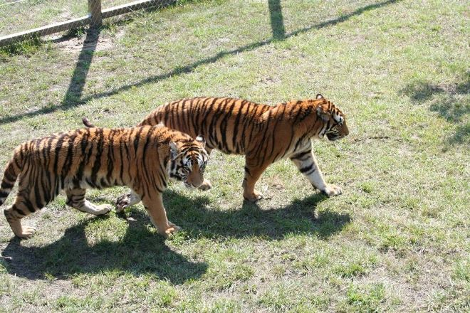 Cedar Cove Feline Conservatory & Education Center, Louisburg, United States