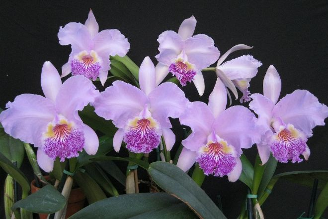 Chadwick & Son Orchids, Powhatan, United States