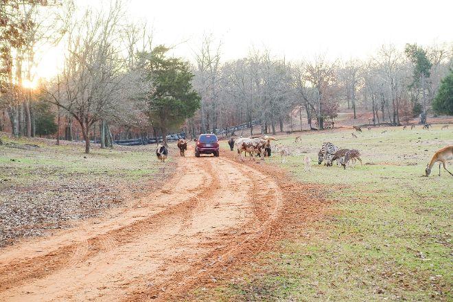 Cherokee Trace Drive-Thru Safari, Jacksonville, United States