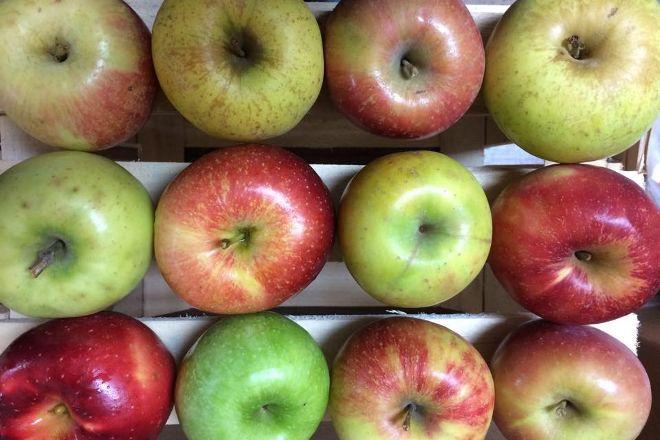 Christ Apple Orchard, Elmwood, United States