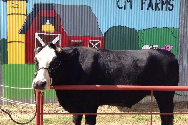 CM Farms, Dry Creek, United States