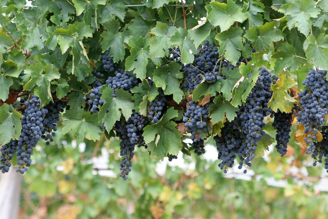 Cove Point Winery, Lusby, United States