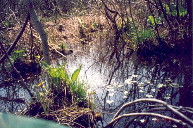 Cowles Bog, Chesterton, United States